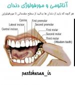 آموزش آناتومی و مورفولوژی دندان